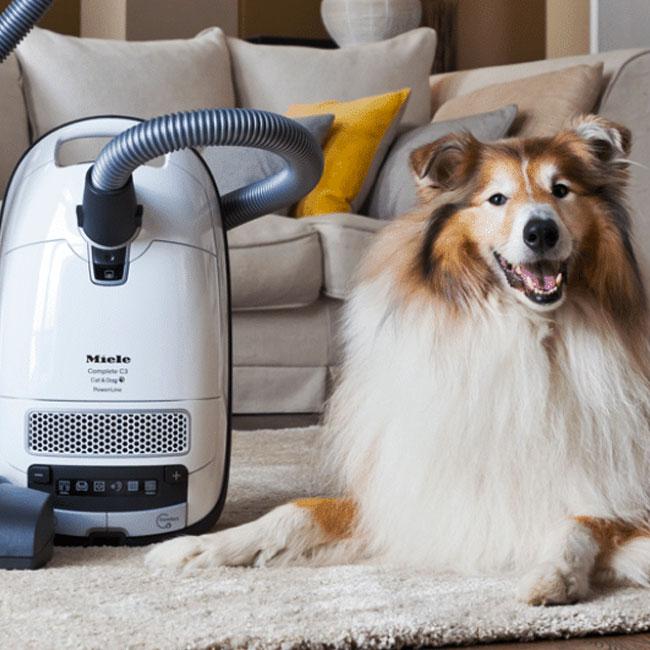 Schotse herdershond zit naast de Miele Complete C3 Cat&Dog Powerline SGEF3 stofzuiger zonder zak op een tapijt