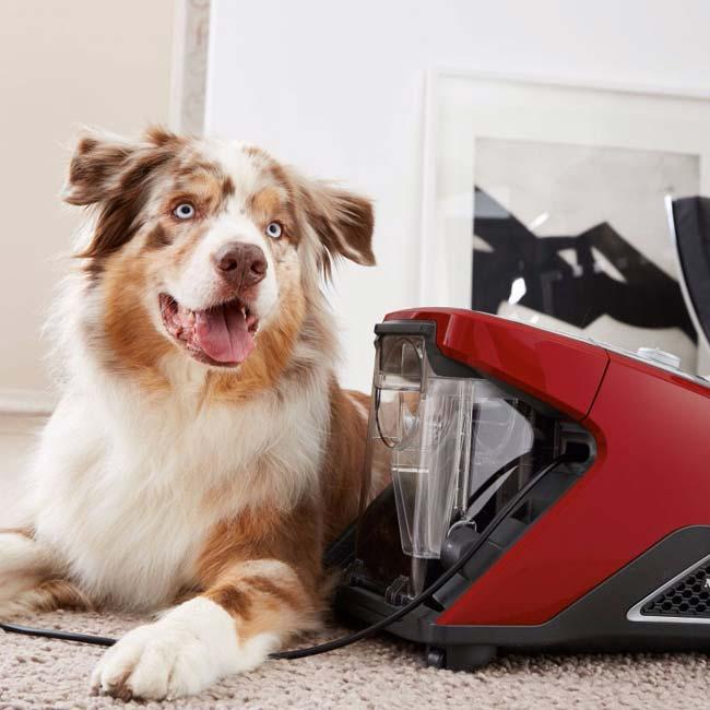 Stofzuiger zonder zak zonder dierenharen - hond zit naast de stofzuiger